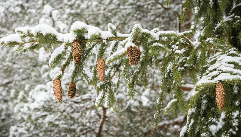 De wintersprookje in het bos royalty-vrije stock afbeeldingen