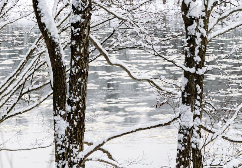 De wintersprookje in het bos door de rivier royalty-vrije stock foto