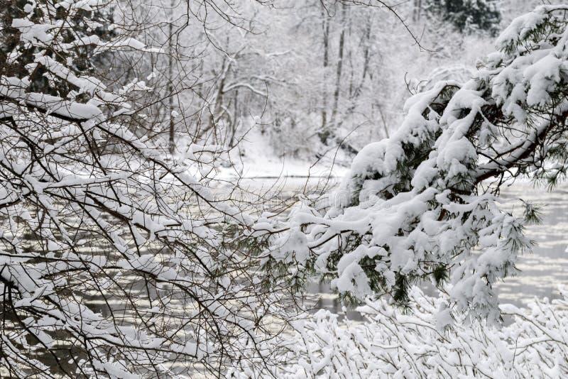 De wintersprookje in het bos door de rivier royalty-vrije stock fotografie
