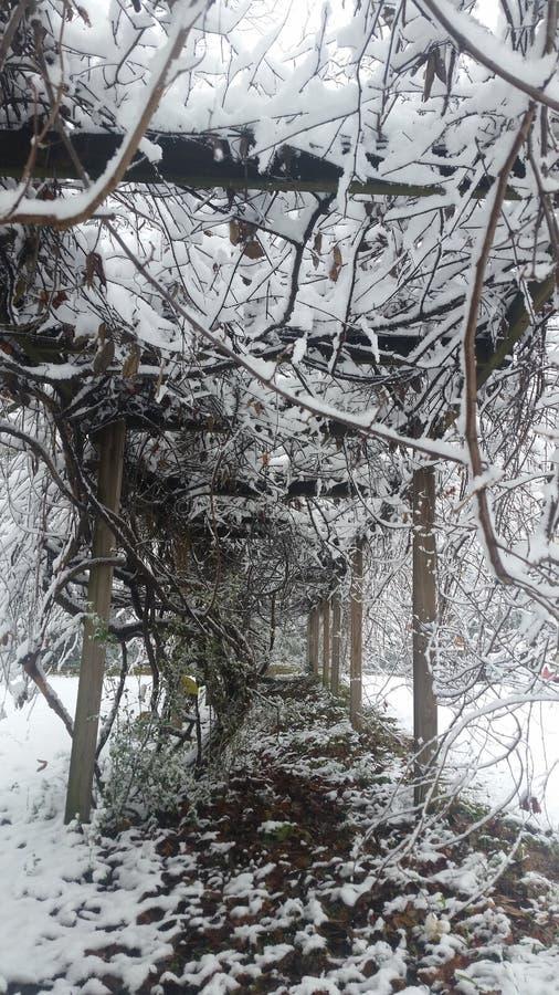 Download De wintersprookjesland stock afbeelding. Afbeelding bestaande uit takje - 107702747