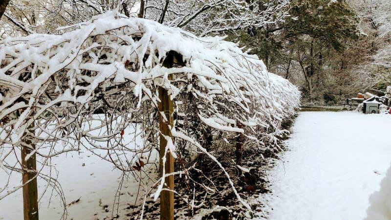 Download De wintersprookjesland stock afbeelding. Afbeelding bestaande uit takje - 107702897