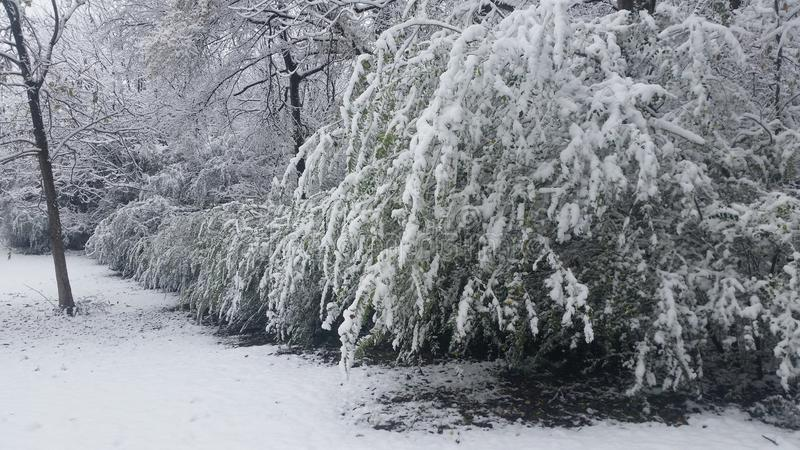 Download De wintersprookjesland stock afbeelding. Afbeelding bestaande uit installatie - 107703093