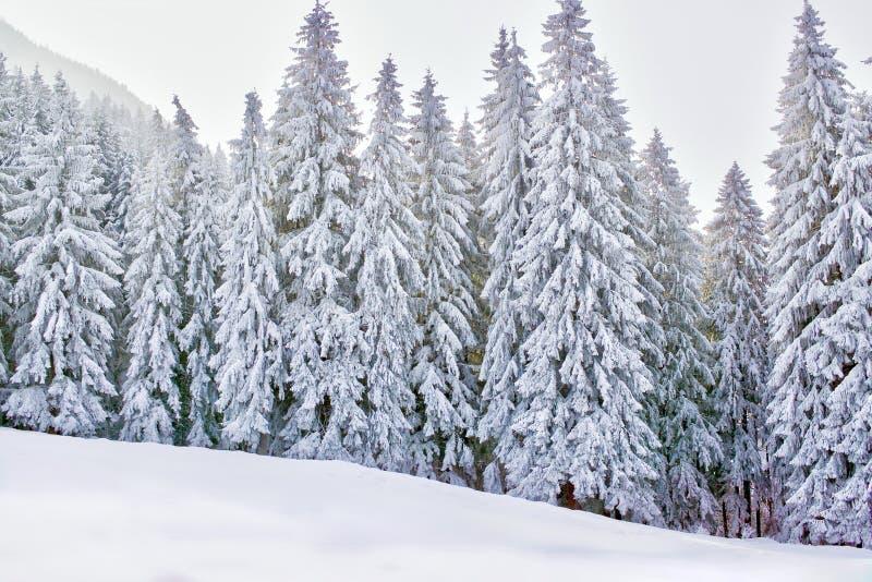 De wintersprookjesland met sneeuwbomen en bergen royalty-vrije stock afbeelding