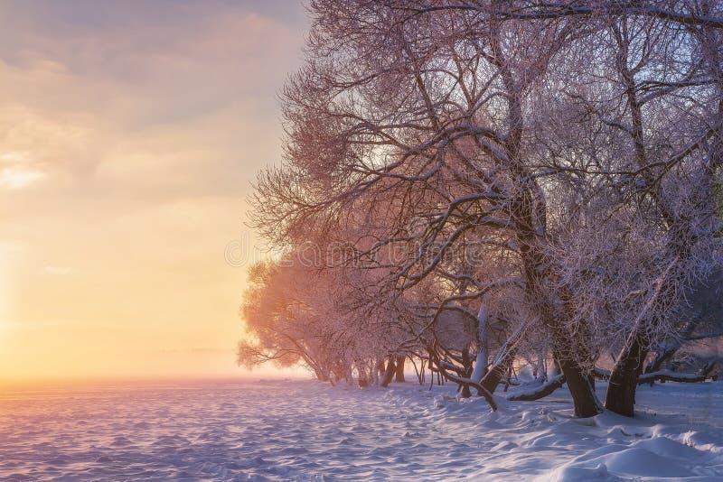 De wintersprookjesland Verbazende de winterscène bij zonsondergang De achtergrond van Kerstmis Helder zonlicht Kerstmisvakantie S royalty-vrije stock afbeelding