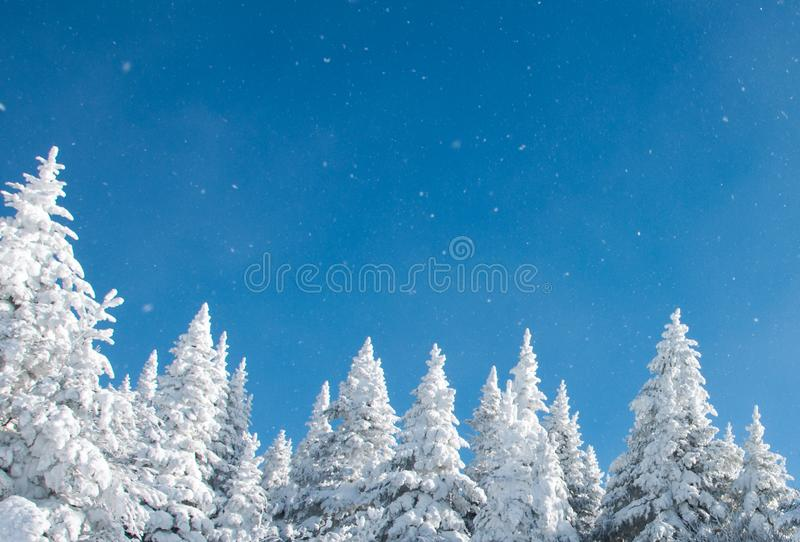 De wintersprookjesland - de Zonnige de winterdag met blauwe hemel en sneeuw behandelde bomen royalty-vrije stock fotografie