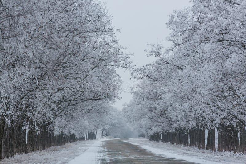 De wintersteeg royalty-vrije stock afbeeldingen