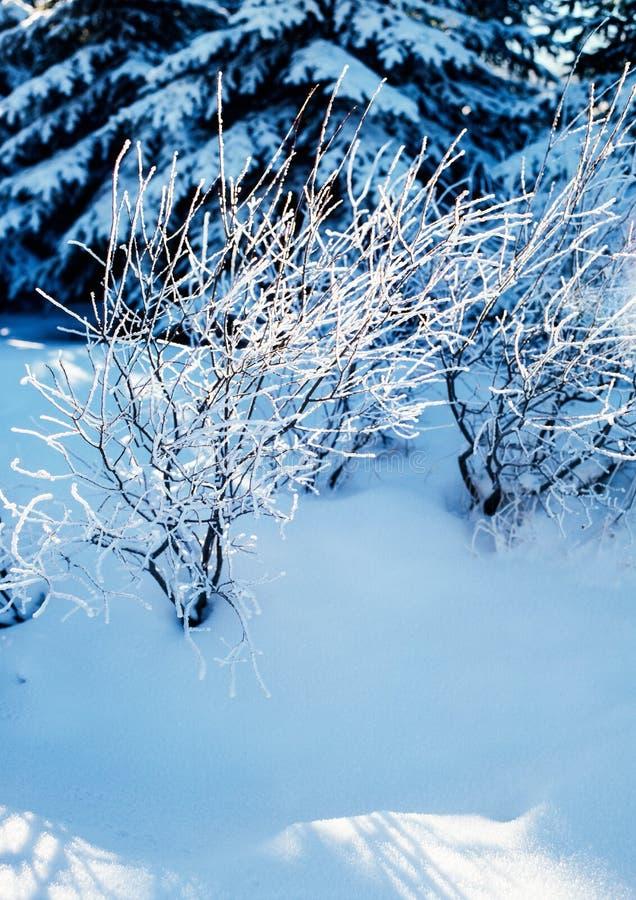 De winterstilte royalty-vrije stock foto's
