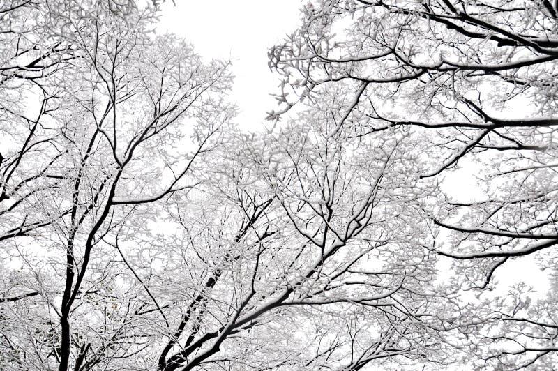 De wintertakken van bomen op achtergrondsneeuw en witte hemel stock afbeeldingen