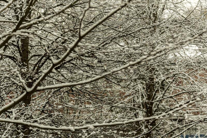 De wintertijd in het meest forrest royalty-vrije stock afbeelding