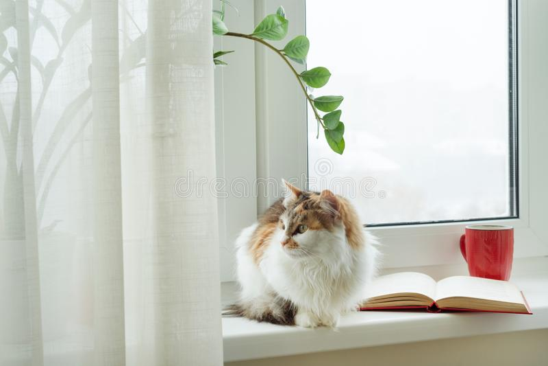 De wintertijd, kattenzitting op de vensterbank die uit het sneeuwvenster kijken Op het vensterbank open boek en de kop met hete d royalty-vrije stock afbeelding