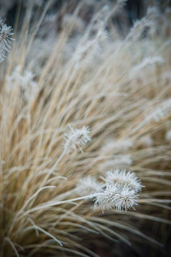 De wintervorst op vooryard decoratief gras stock foto