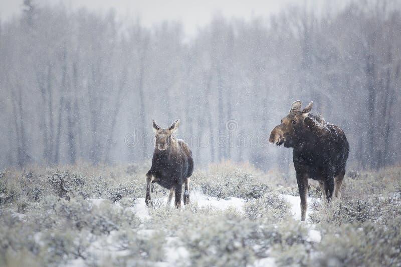 De winterwandeling stock afbeelding