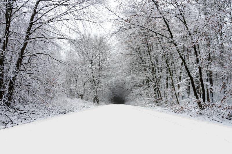 De winterweg in boshoogtepunt van sneeuw stock afbeeldingen