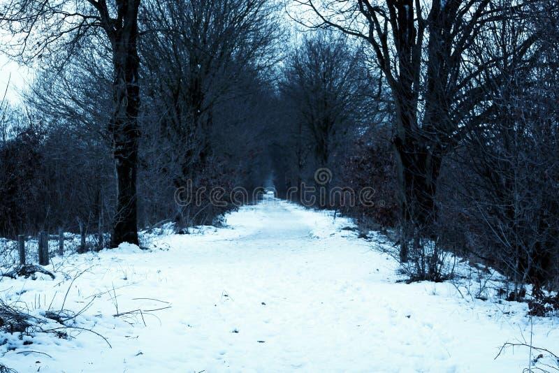 De winterweg met sneeuw stock afbeeldingen