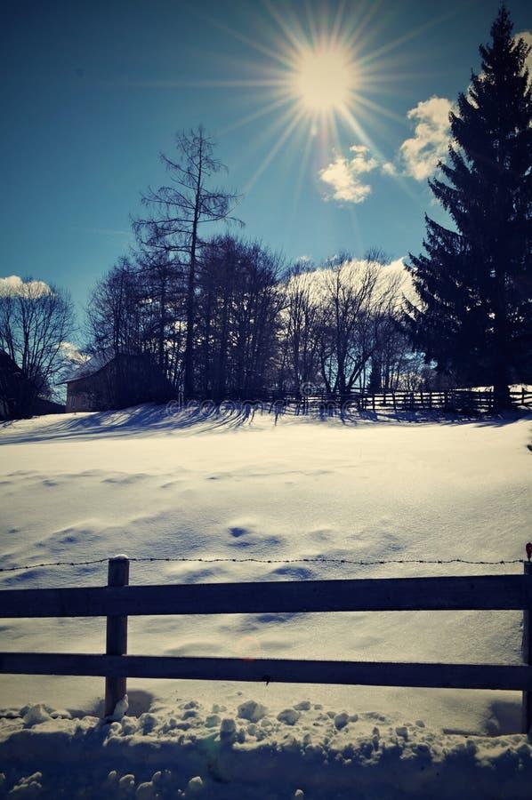 De winterweide royalty-vrije stock fotografie