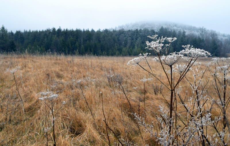 De winterweide, West-Virginia stock fotografie