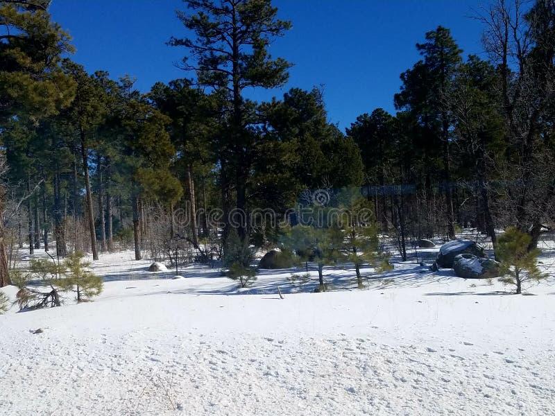 De winterwonder land stock afbeeldingen