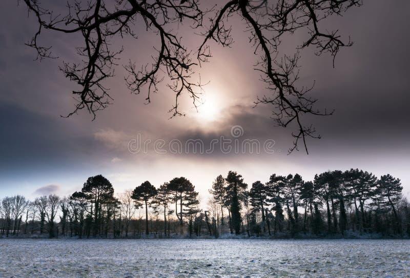 De winterzon die achter lijn van sneeuw behandelde bomen plaatsen royalty-vrije stock afbeeldingen