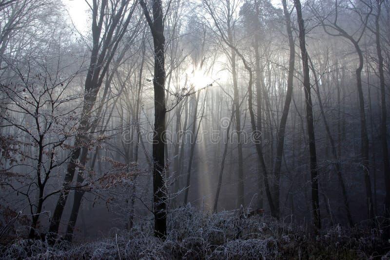 De winterzon Lichte Ic die door Frosen Forest Trees komen stock afbeeldingen