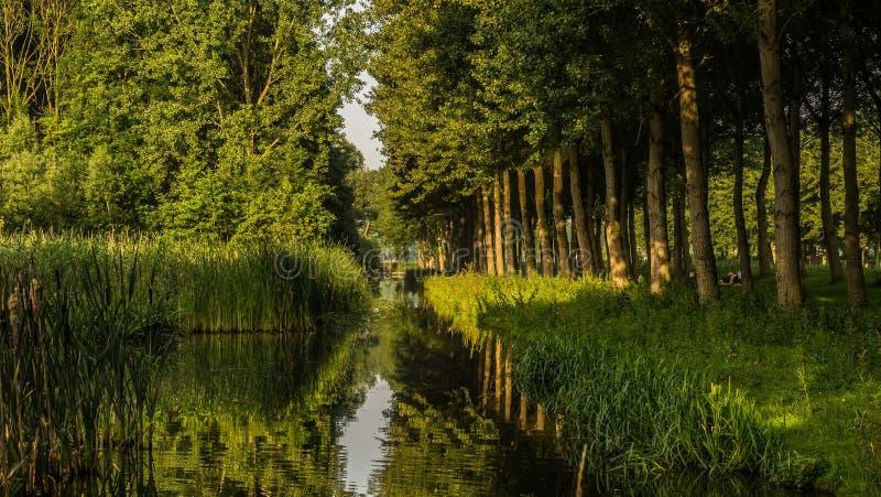 De winterzon op de recente bomen van het de herfst boskanaal en donkere schaduwen stock foto