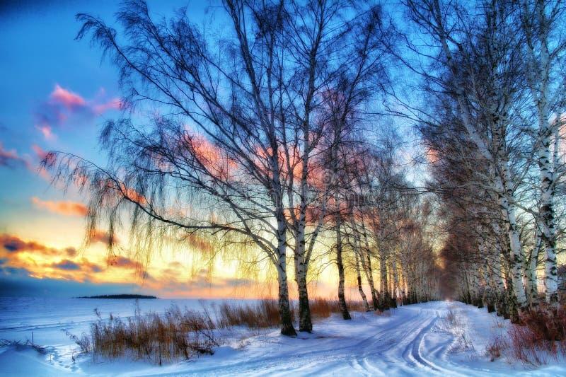 De winterzonsondergang in de berkweg Rusland royalty-vrije stock foto