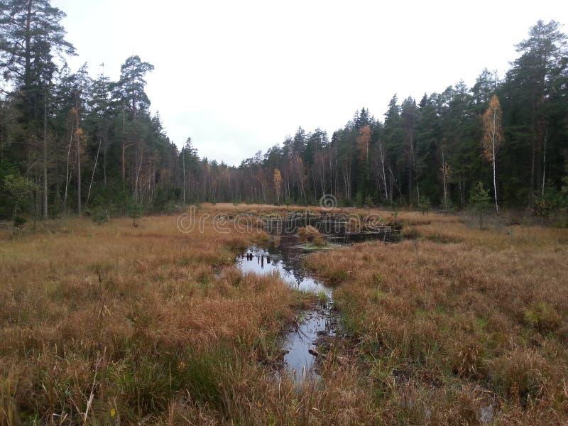 De Witrussische herfst stock afbeeldingen