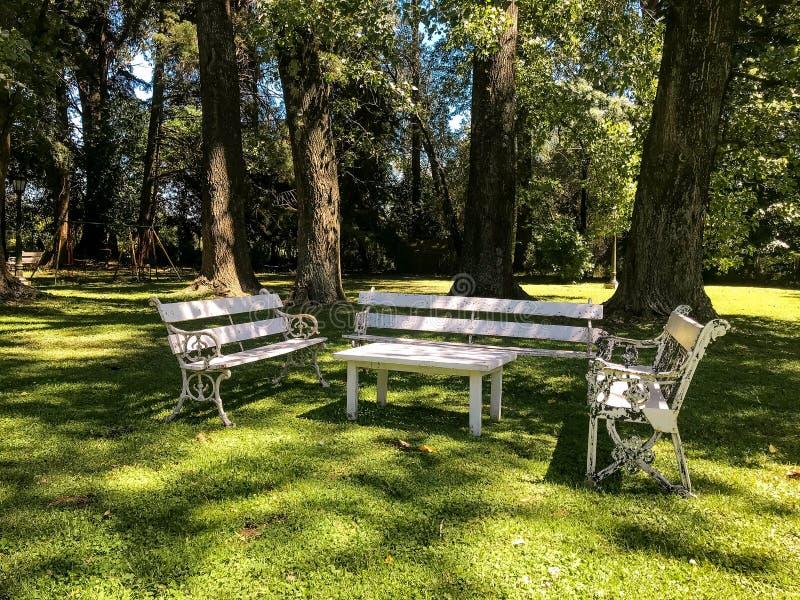 De witte banken en de lijst bevinden zich in het park op de achtergrond van grote bomen stock fotografie