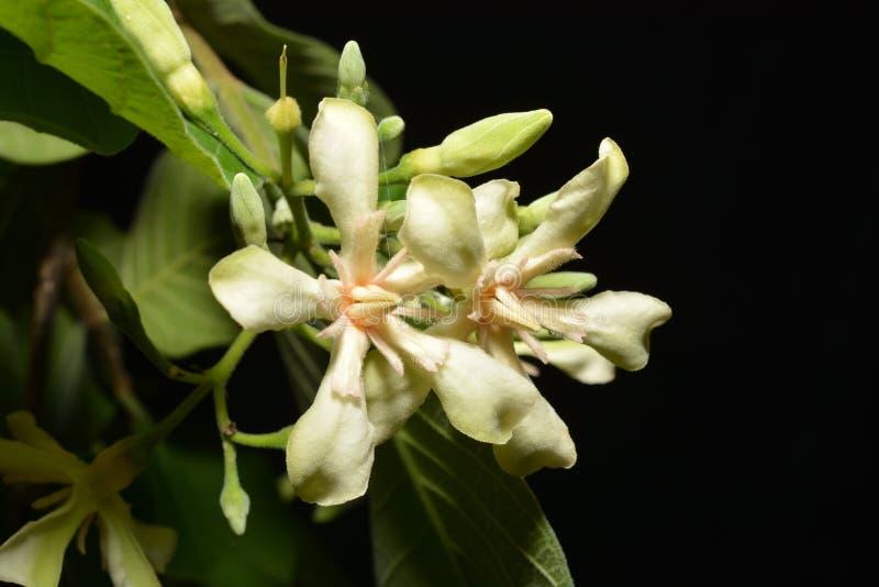 De witte bloemen royalty-vrije stock foto