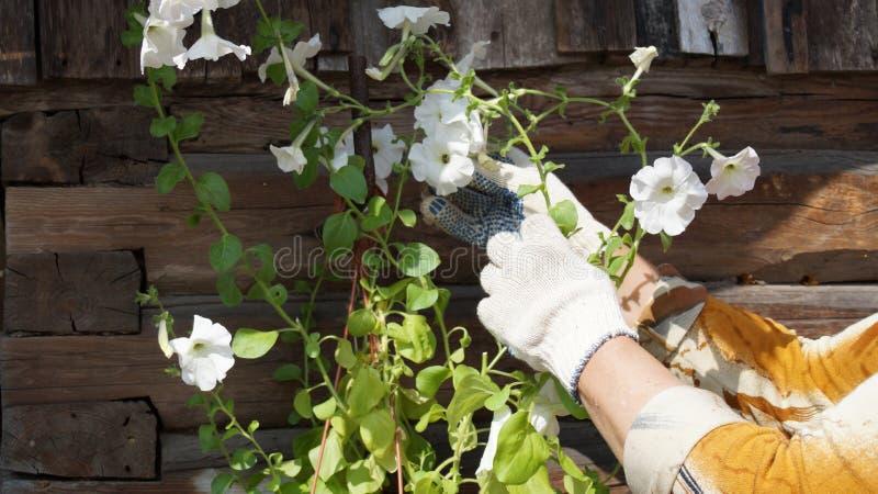 De witte Bloemen van de Tuin stock afbeelding