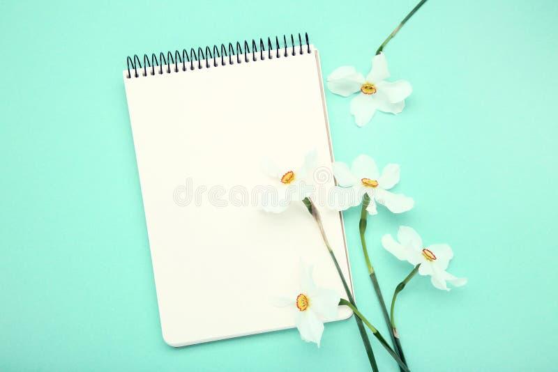 De witte bloemen van Narcissen royalty-vrije stock foto