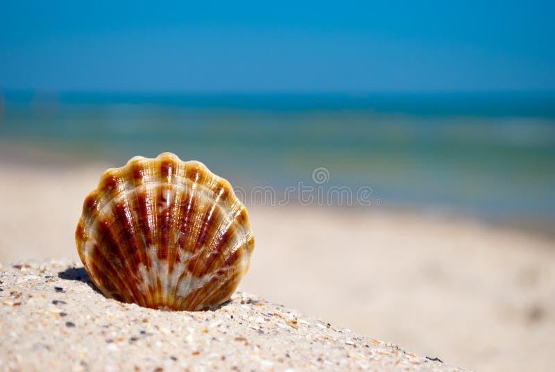 De witte bruine leugens van Shell op het zand op een achtergrond van blauwe overzees en de blauwe vakantie van de hemelzomer stock afbeeldingen