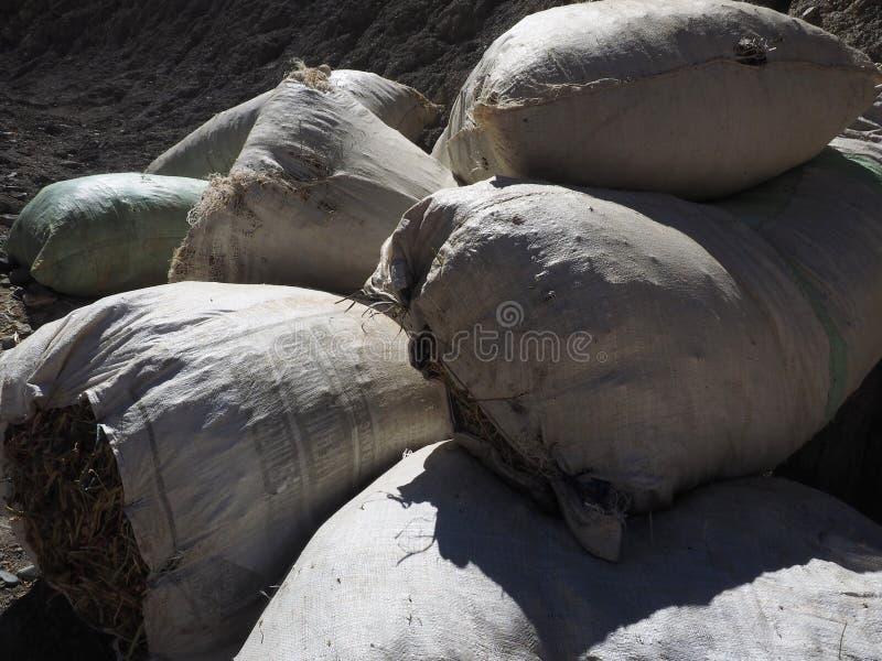 Download De Witte Die Canvaszakken, Met Het Droge Gras Worden Gevuld, Liggen Op De Hoop Stock Afbeelding - Afbeelding bestaande uit stof, landbouwbedrijf: 107703295