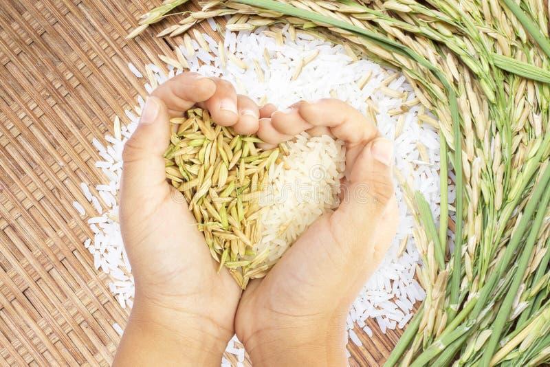 De witte die en ongepelde rijst in gevormd hart wordt gehouden overhandigt witte rijstachtergrond royalty-vrije stock fotografie