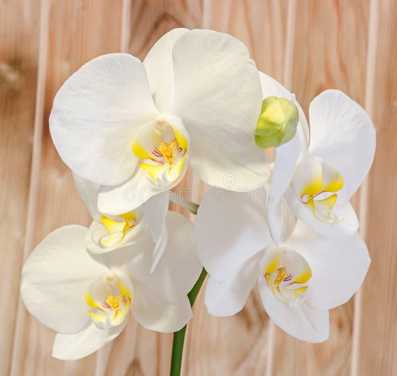 De witte die takorchidee bloeit met knoppen, Orchidaceae, Phalaenopsis als de Mottenorchidee wordt bekend Houten achtergrond stock foto's