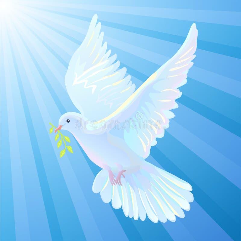 De witte duif is het symbool van een vrede, lichtstralen royalty-vrije illustratie