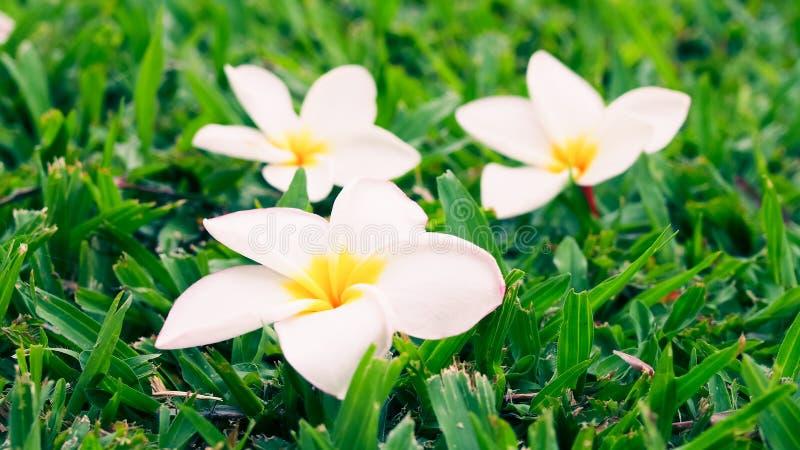 De Witte elegante bloem stock afbeelding