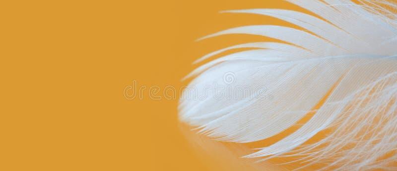 De witte foto van het veer geweven patroon De macromening van het kippengevederte over gele achtergrond Tederheidsconcept Ondiepe stock foto