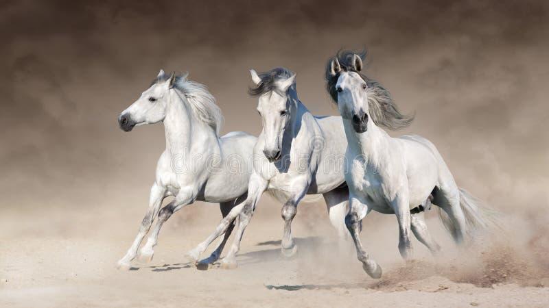 De witte galop van de paardenlooppas royalty-vrije stock afbeelding
