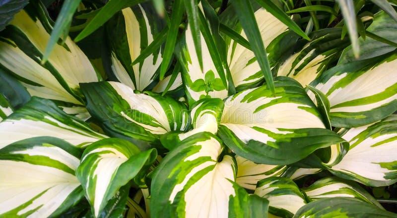 De witte groene bladzomer als achtergrond royalty-vrije stock afbeeldingen