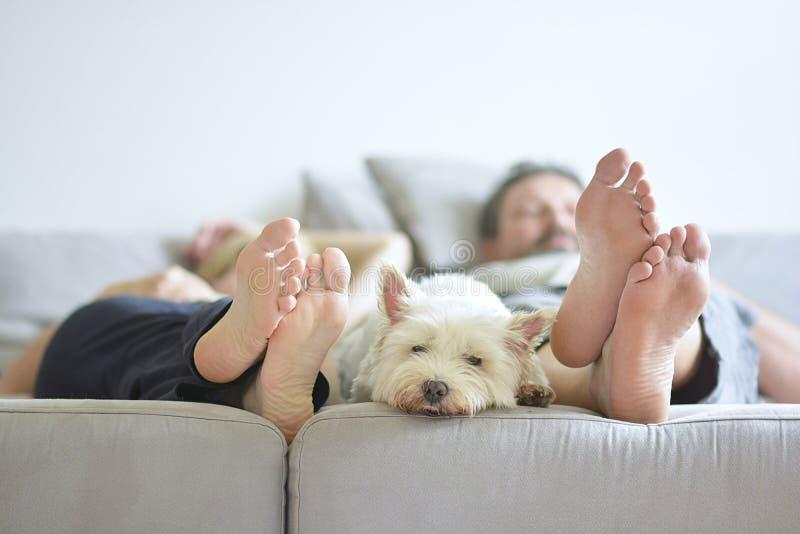 De witte hond van het huiscomfort stock foto