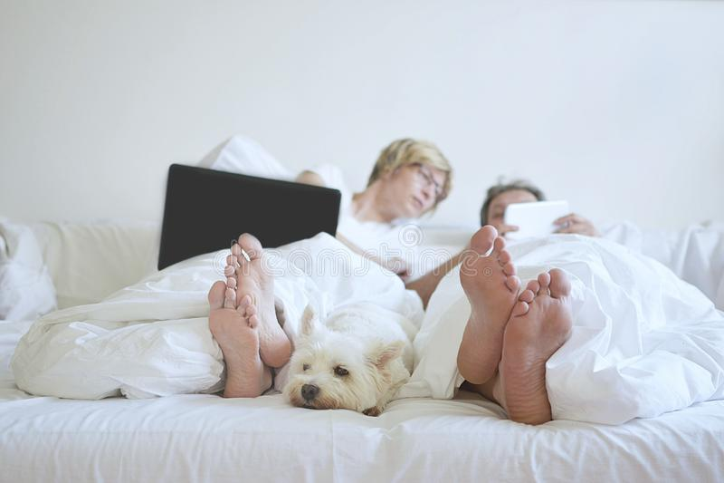 De witte hond van het huiscomfort in slaapkamer stock foto