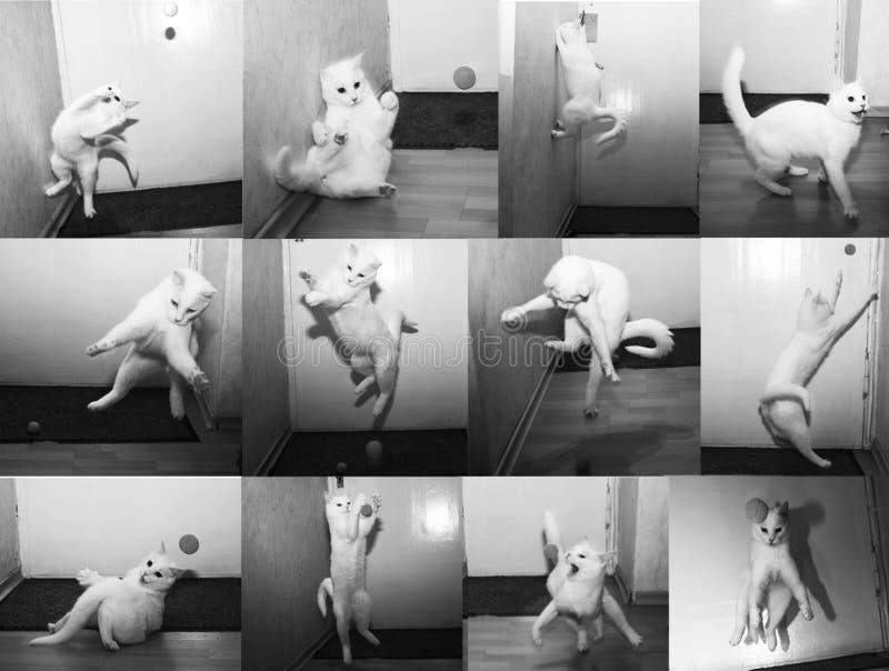 De witte kat achtervolgt de bal royalty-vrije stock afbeeldingen