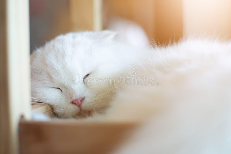 De witte kat slaapt met zonlicht royalty-vrije stock afbeeldingen