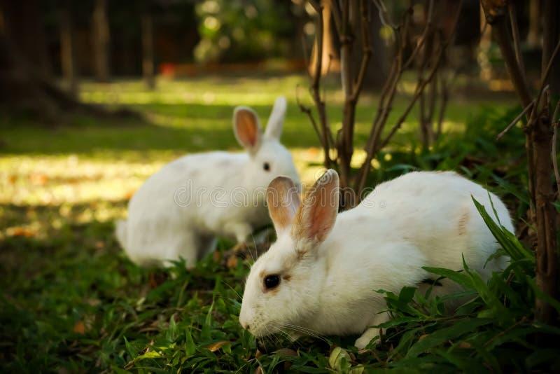 De witte konijnen loopt in het bos royalty-vrije stock afbeeldingen