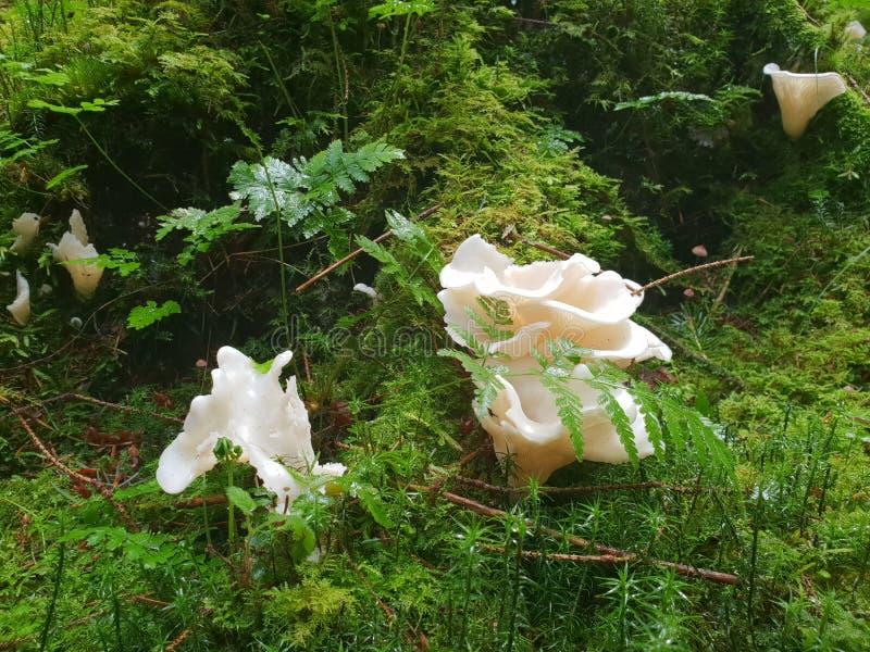 De witte landschappen van het paddestoelen Bosgezoem stock fotografie