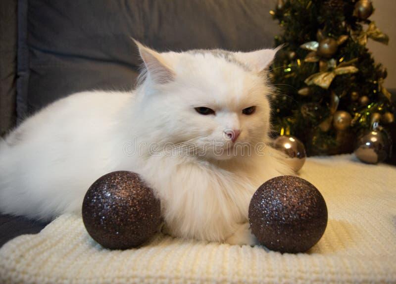 De witte mooie kat met groene ogen ligt op een grijze sjaal op de achtergrond van een Kerstboom en vakantiedecoratie, w stock afbeeldingen