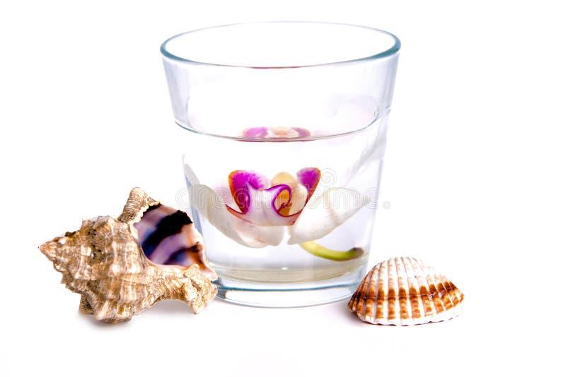 Orchidee in een glas met water royalty-vrije stock foto's