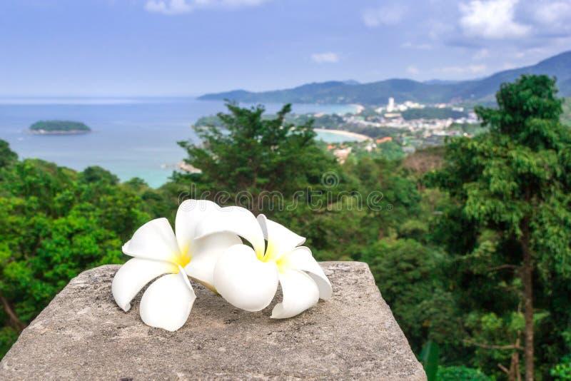 De witte plumeriabloemen zijn met een panorama van Thailand Frangipaniclose-up Twee mooie witte bloemen royalty-vrije stock foto