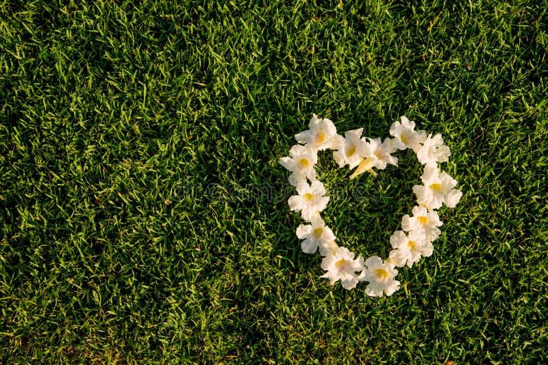 De witte vorm van het bloemenhart op een groen grassengebied stock foto