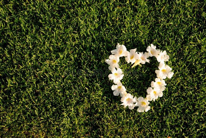 De witte vorm van het bloemenhart op een groen grassengebied royalty-vrije stock foto